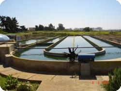 Microalgae and Wastewater Treatment